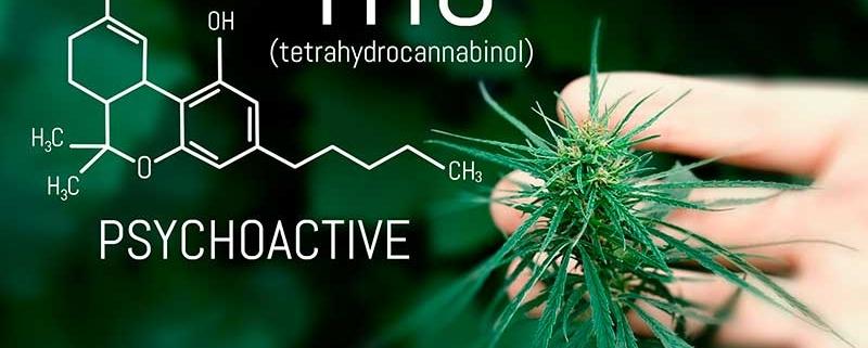 TCH cannabis